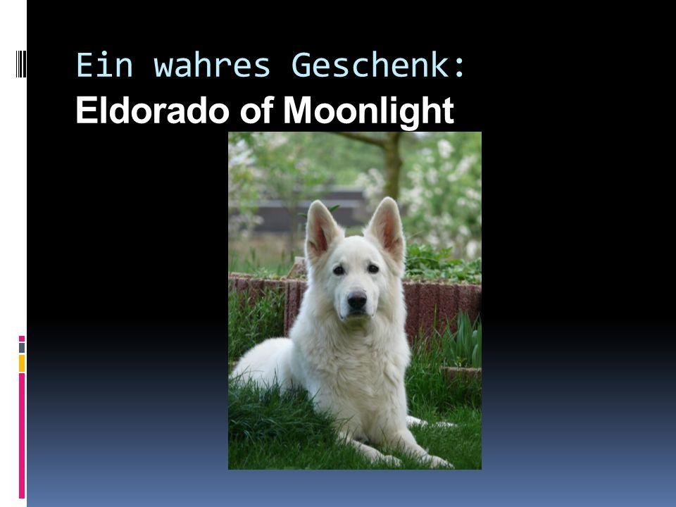 Eldo tut gerne… Viel Schlafen und ruhen… Ab und zu spielen und toben… Kater Ronny & Romeo ärgern… Vögel jagen… Lange ausgiebige Spaziergänge… Unterord