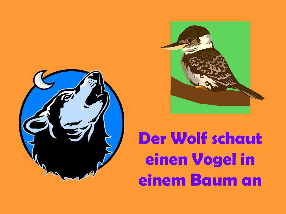 Der Wolf schaut einen Vogel in einem Baum an