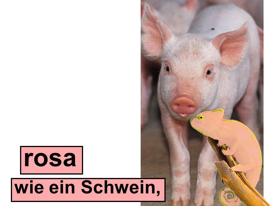 wie ein Schwein, rosa
