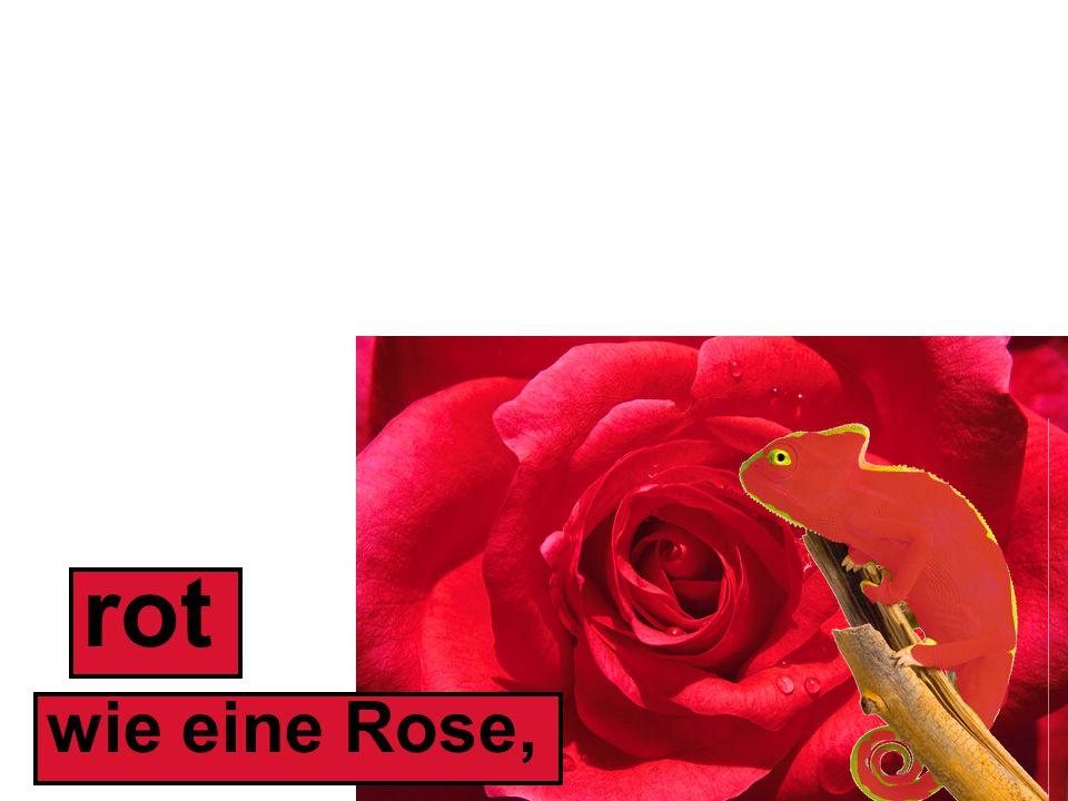 wie eine Rose, rot