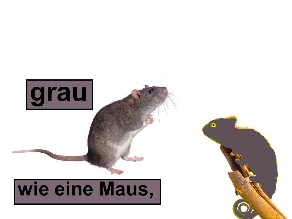 wie eine Maus, grau