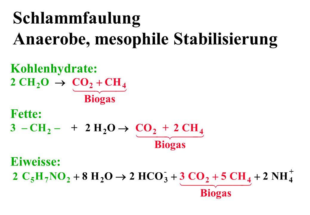 Schlammfaulung Anaerobe, mesophile Stabilisierung Kohlenhydrate: 2 CH 2 O 4 CO Biogas 2 CH Eiweisse: H HCO NH 23 - 4 + OC 5 HNO 72 822 CO CH 24 Biogas