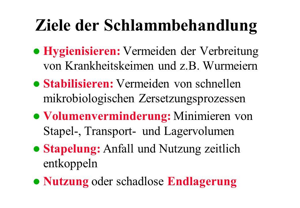Schlammbehandlung l Die Elimination von unerwünschten Stoffen aus dem Klärschlamm (z.B.