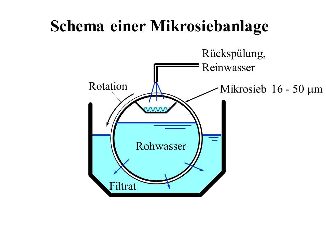 Rohwasser Rückspülung, Reinwasser Filtrat Mikrosieb 16 - 50 m Rotation Schema einer Mikrosiebanlage