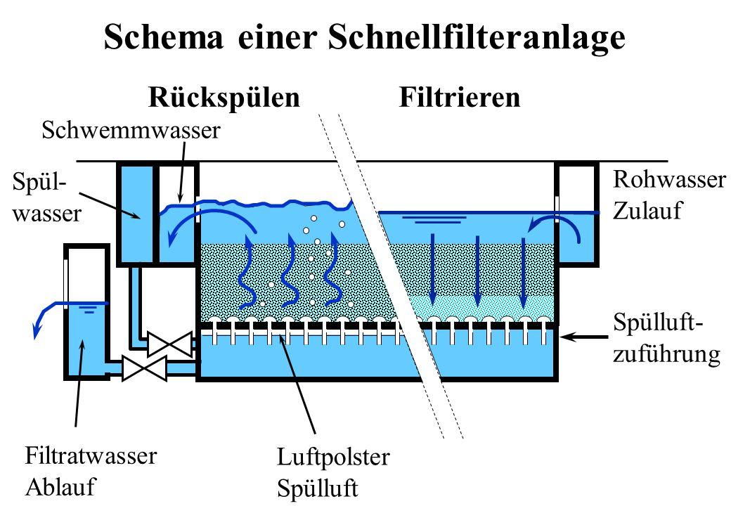 RückspülenFiltrieren Rohwasser Zulauf Filtratwasser Ablauf Spülluft- zuführung Spül- wasser Schwemmwasser Luftpolster Spülluft Schema einer Schnellfil