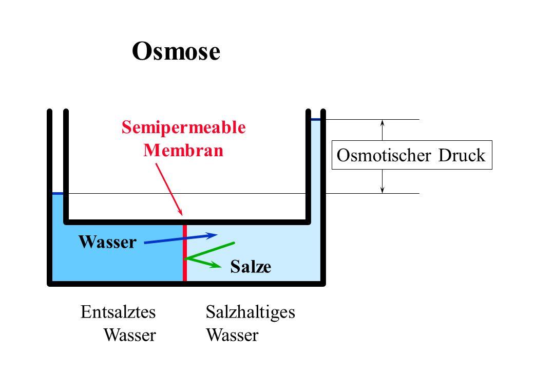 Osmose Salzhaltiges Wasser Entsalztes Wasser Salze Wasser Osmotischer Druck Semipermeable Membran