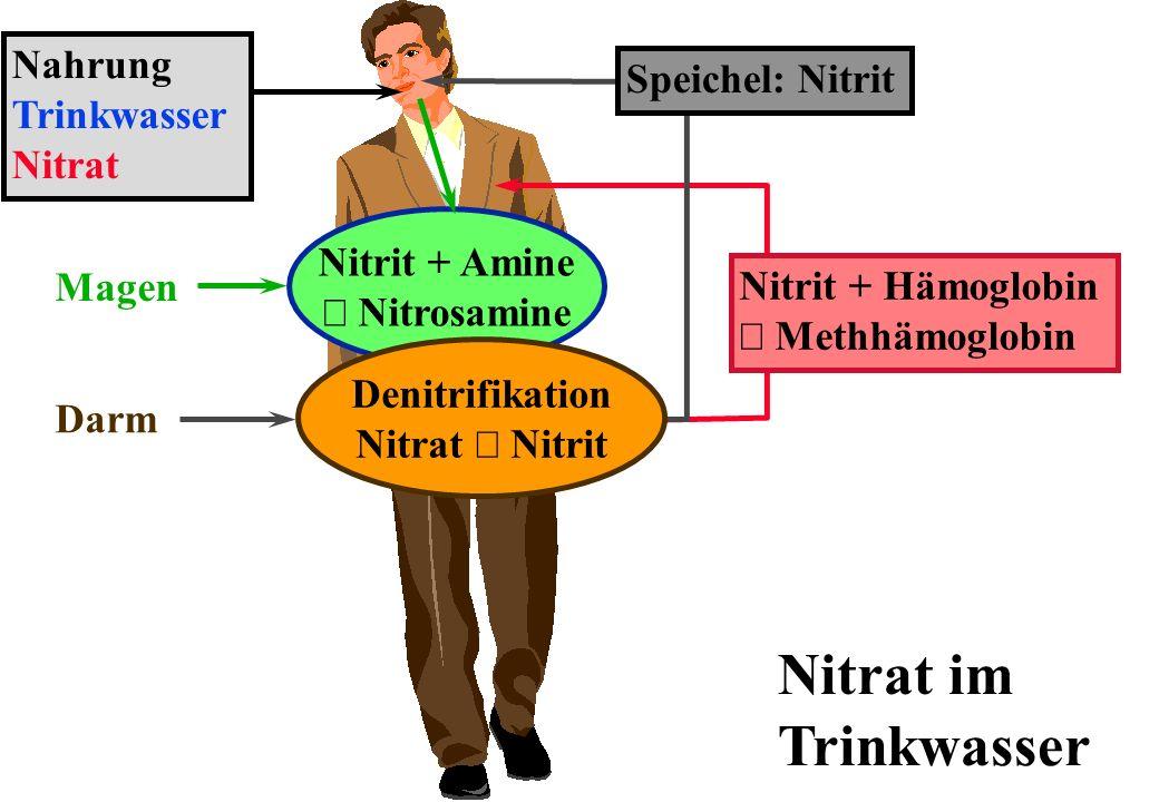 Nitrat im Trinkwasser Nitrit + Amine Nitrosamine Magen Darm Denitrifikation Nitrat Nitrit Speichel: Nitrit Nitrit + Hämoglobin Methhämoglobin Nahrung