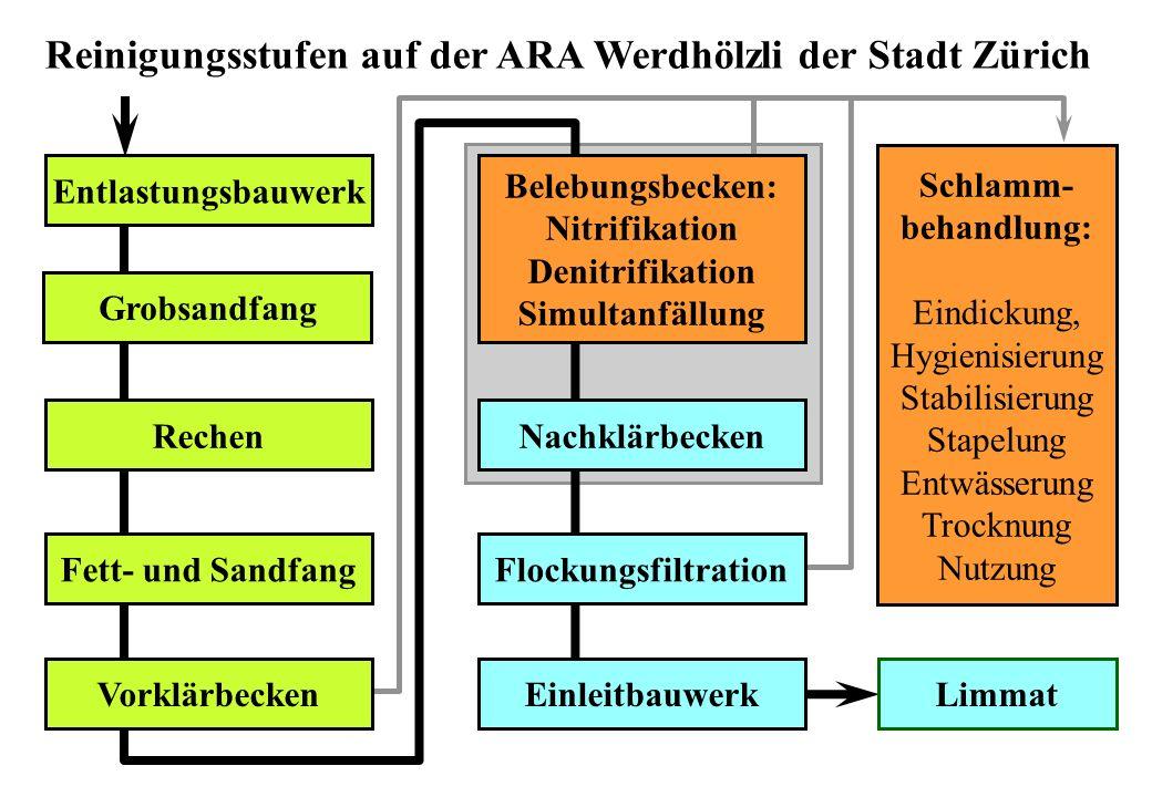 Reinigungsstufen auf der ARA Werdhölzli der Stadt Zürich Grobsandfang Rechen Fett- und Sandfang Vorklärbecken Nachklärbecken Flockungsfiltration Einle