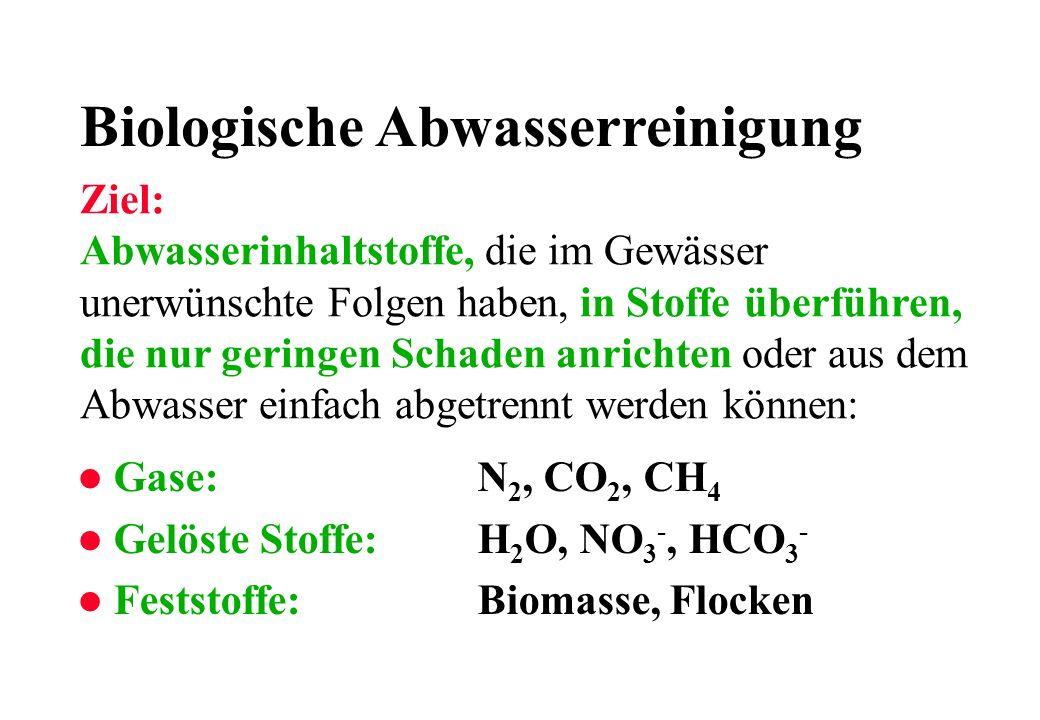 Biologische Abwasserreinigung l Gase:N 2, CO 2, CH 4 l Gelöste Stoffe:H 2 O, NO 3 -, HCO 3 - l Feststoffe:Biomasse, Flocken Ziel: Abwasserinhaltstoffe