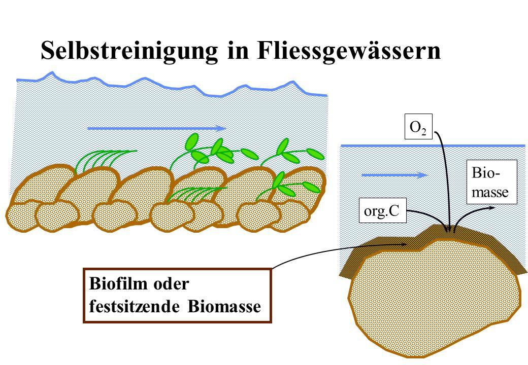 Die Schlammproduktion Erfahrungswert: ÜS B 0.9 - 1 kg TSS kg -1 BSB 5 SP B = Schlammproduktion als Folge des Abbaues von BSB 5 in kg TSS d -1 ÜS B = Spezifische Schlammproduktion in kg TSS kg -1 BSB 5 Q= Zufluss von Abwasser in m 3 d -1 BSB 5 = BSB 5 Konzentration im Zufluss in kg m -3 ÜS B SP B QBSB 5