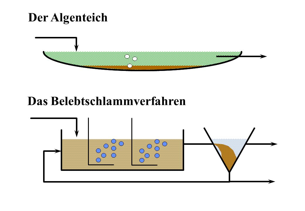 Das Belebtschlammverfahren Zufluss Abfluss Überschuss- schlamm Rücklaufschlamm BelebungsbeckenNachklärbecken Belüftung