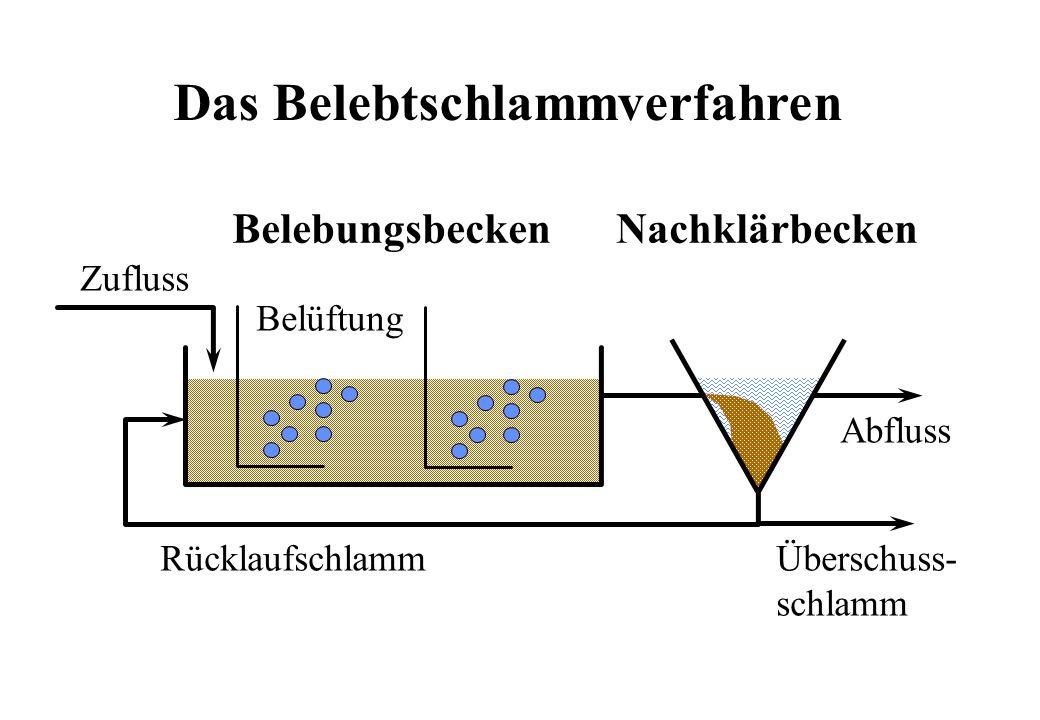 Abbau organischer Stoffe: BSB 5 5 CH 2 + ONHEnergieCHNOHOH 457 22 3 CH CO 22 OOHOEnergie 22 Katabolismus / Abbau Anabolismus / Wachstum / Assimilation + 10 CH O COH 2222 ONHCHNOOH 558 457 2 Total (von aussen beobachtet) CSB BSB Biomasse 320 g 160 g 14 g N 113 g TSS