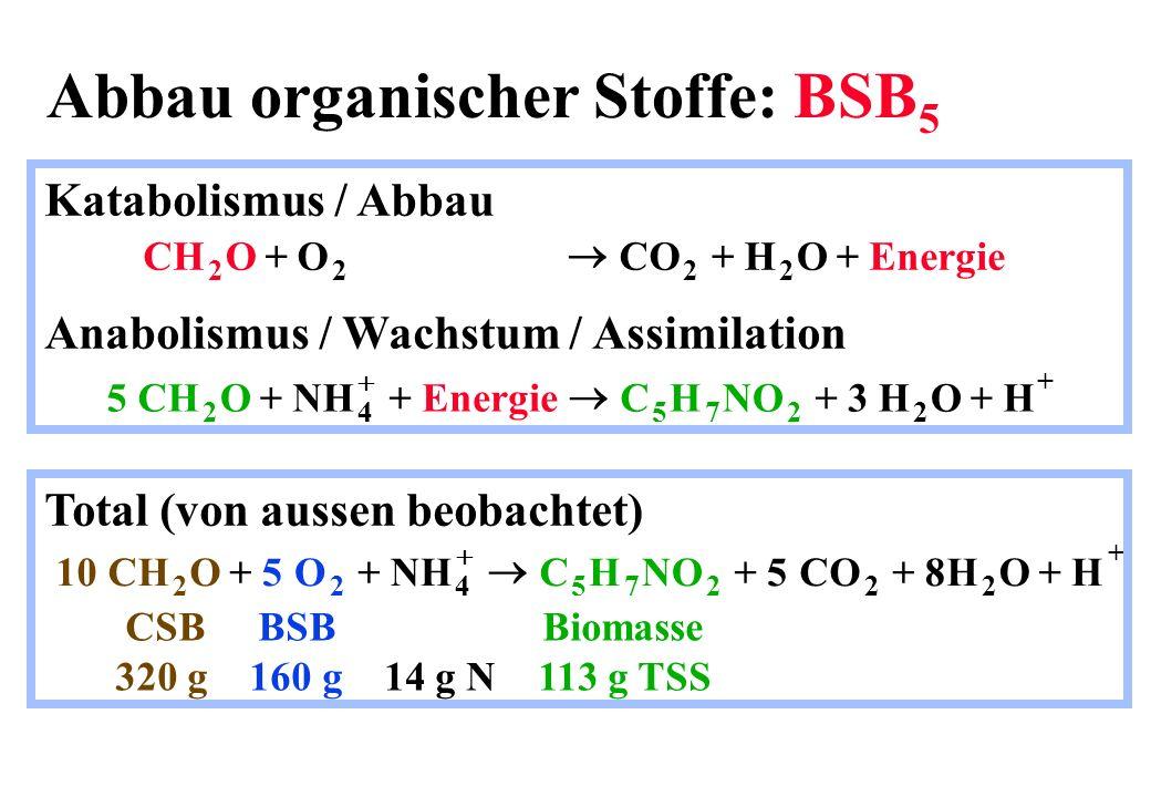 Die Schlammbelastung B TS = Schlammbelastung in kg BSB 5 kg -1 TSS d -1 Q= Zufluss in m 3 d -1 BSB 5 = BSB 5 Konzentration im Zufluss in kg m -3 V BB = Volumen des Belebungsbeckens in m 3 TS BB = Belebtschlammkonzentration in kg TSS m -3 B QBSB VTS Food Mikroorganisms F M TS BB 5