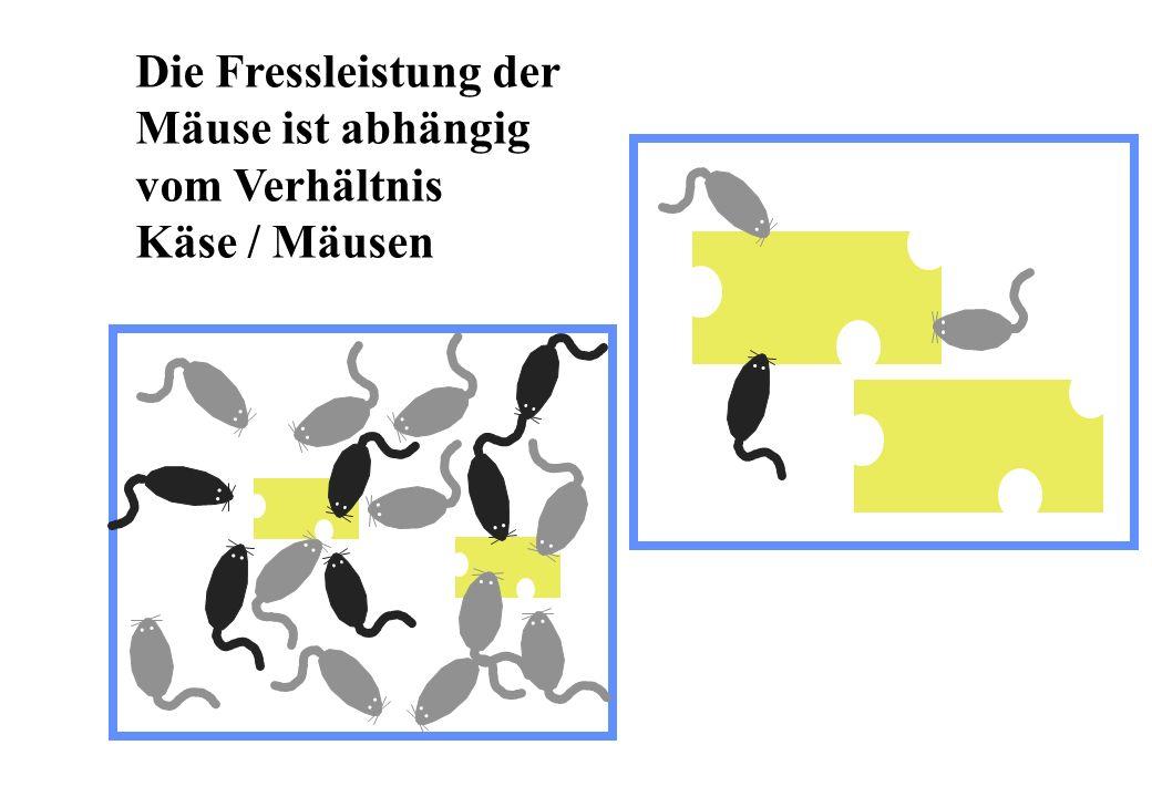 Schlammbelastung B TS in kg BSB 5 kg TSS d Wirkungsgrad für die Elimination von BSB 5 % 100 80 60 40 20 0 > 13°C < 11°C 0.10.20.40.60.81246810 < 11°C > 13°C