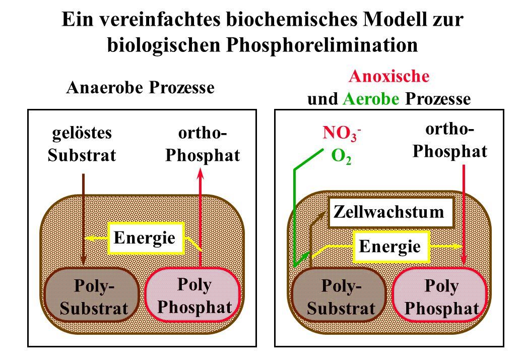 Ein vereinfachtes biochemisches Modell zur biologischen Phosphorelimination gelöstes Substrat ortho- Phosphat Poly- Substrat Poly Phosphat Energie Ana