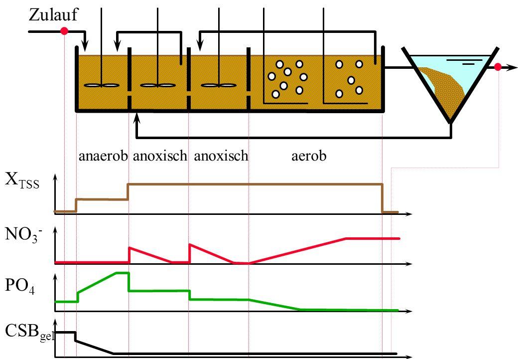 Zulauf anaerob X TSS NO 3 - PO 4 CSB gel anoxisch aerob