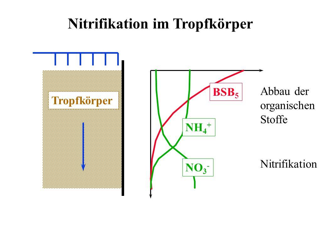 Nitrifikation im Tropfkörper Tropfkörper BSB 5 NH 4 + NO 3 - Nitrifikation Abbau der organischen Stoffe