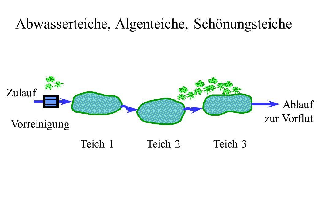 Zulauf Ablauf zur Vorflut Teich 1Teich 2Teich 3 Vorreinigung Abwasserteiche, Algenteiche, Schönungsteiche