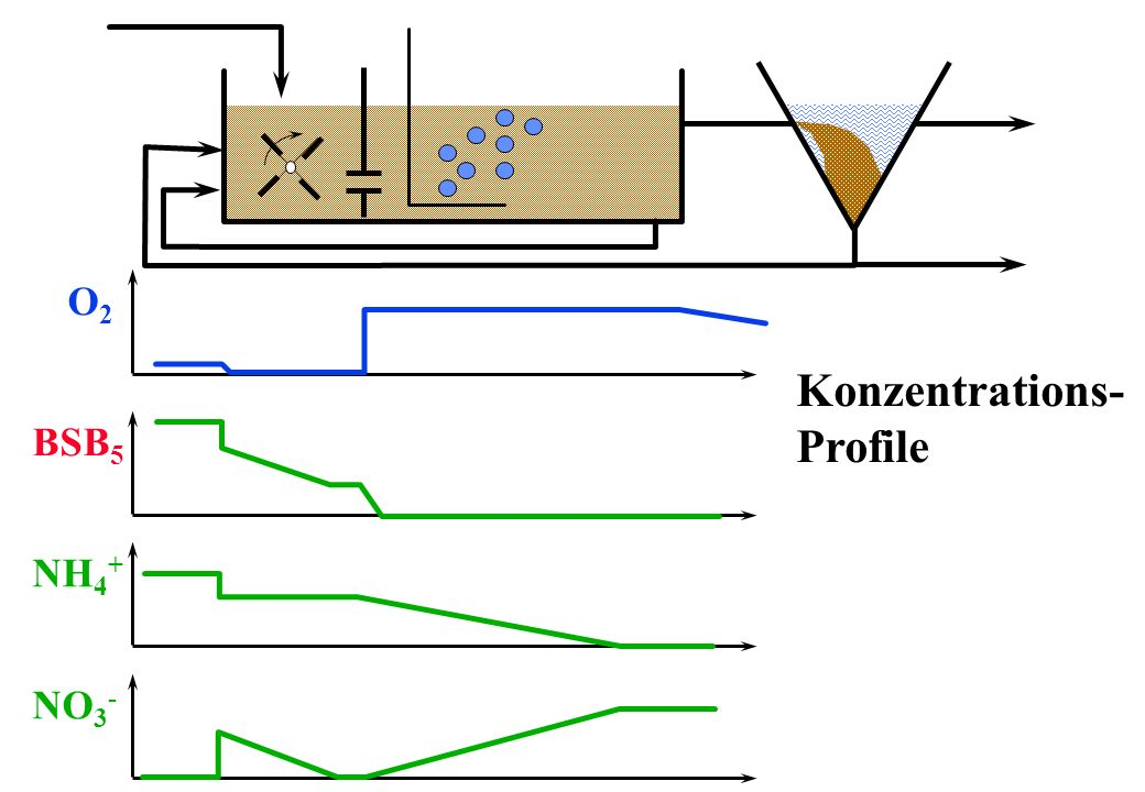 NH 4 + NO 3 - O2O2 BSB 5 Konzentrations- Profile