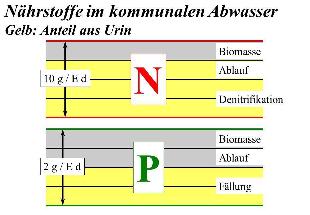 N 10 g / E d Biomasse Ablauf Denitrifikation P 2 g / E d Biomasse Fällung Nährstoffe im kommunalen Abwasser Gelb: Anteil aus Urin Ablauf