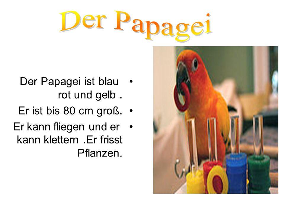 Der Papagei ist blau rot und gelb. Er ist bis 80 cm groß. Er kann fliegen und er kann klettern.Er frisst Pflanzen.