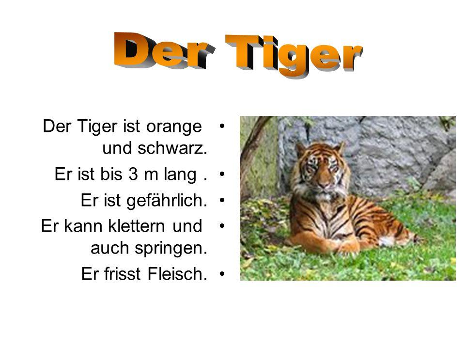 Der Tiger ist orange und schwarz. Er ist bis 3 m lang. Er ist gefährlich. Er kann klettern und auch springen. Er frisst Fleisch.