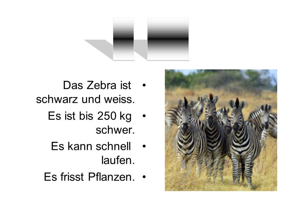 Das Zebra ist schwarz und weiss. Es ist bis 250 kg schwer. Es kann schnell laufen. Es frisst Pflanzen.