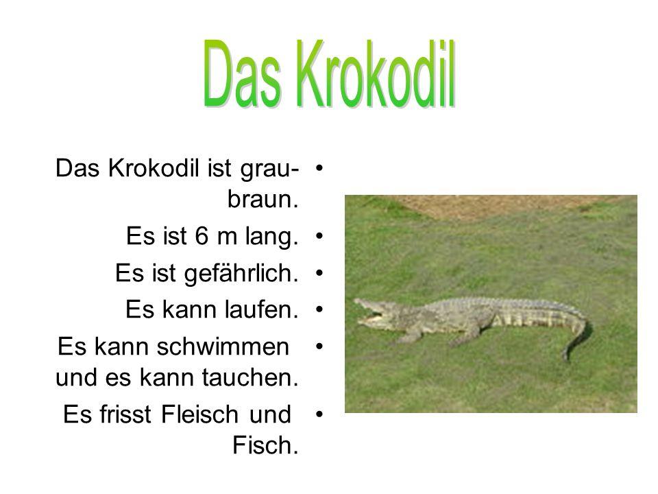 Das Krokodil ist grau- braun. Es ist 6 m lang. Es ist gefährlich. Es kann laufen. Es kann schwimmen und es kann tauchen. Es frisst Fleisch und Fisch.