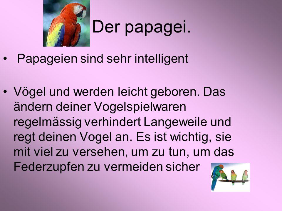 Der papagei.Papageien sind sehr intelligent Vögel und werden leicht geboren.