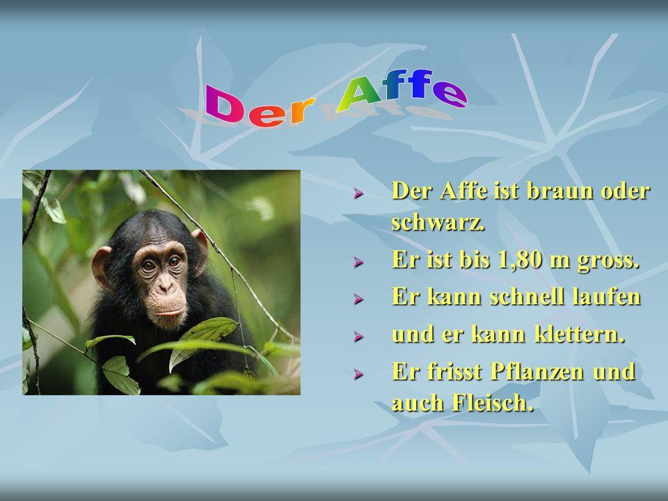 Der Affe ist braun oder schwarz. Der Affe ist braun oder schwarz. Er ist bis 1,80 m gross. Er ist bis 1,80 m gross. Er kann schnell laufen Er kann sch