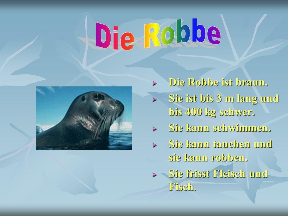 Die Robbe ist braun. Die Robbe ist braun. Sie ist bis 3 m lang und bis 400 kg schwer. Sie ist bis 3 m lang und bis 400 kg schwer. Sie kann schwimmen.