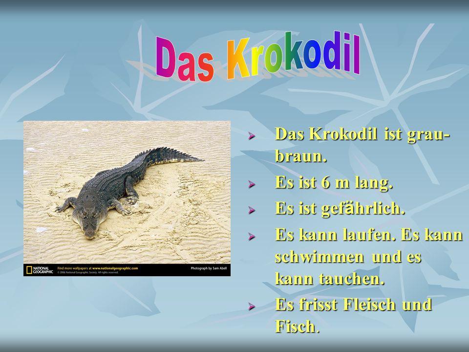 Das Krokodil ist grau- braun. Das Krokodil ist grau- braun. Es ist 6 m lang. Es ist 6 m lang. Es ist gef ä hrlich. Es ist gef ä hrlich. Es kann laufen