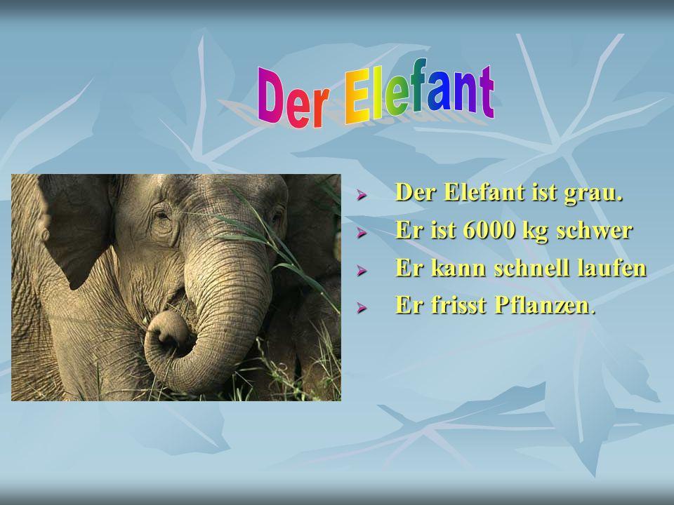 Der Elefant ist grau. Der Elefant ist grau. Er ist 6000 kg schwer Er ist 6000 kg schwer Er kann schnell laufen Er kann schnell laufen Er frisst Pflanz