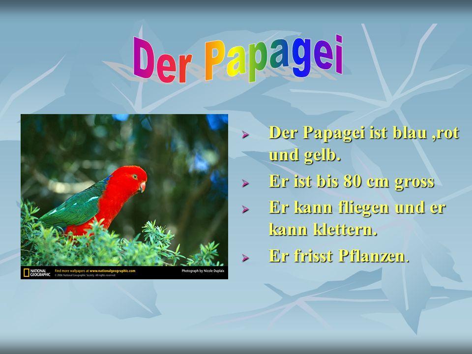 Der Papagei ist blau,rot und gelb. Der Papagei ist blau,rot und gelb. Er ist bis 80 cm gross Er ist bis 80 cm gross Er kann fliegen und er kann klette