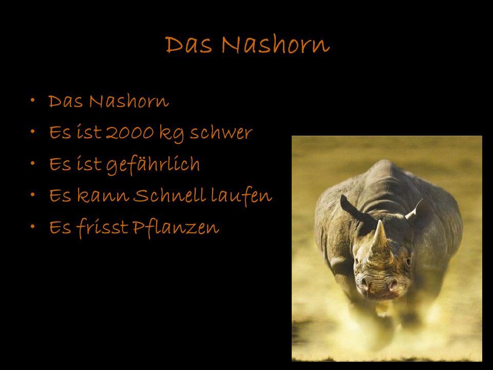 Das Nashorn Es ist 2000 kg schwer Es ist gefährlich Es kann Schnell laufen Es frisst Pflanzen