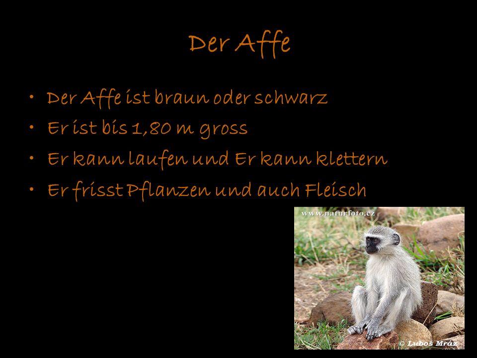 Der Affe Der Affe ist braun oder schwarz Er ist bis 1,80 m gross Er kann laufen und Er kann klettern Er frisst Pflanzen und auch Fleisch