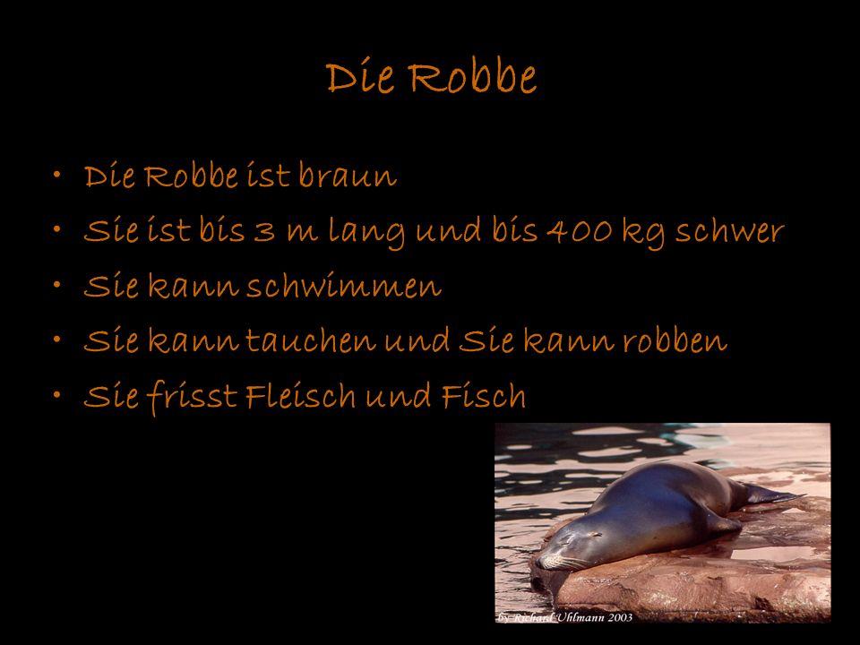 Die Robbe Die Robbe ist braun Sie ist bis 3 m lang und bis 400 kg schwer Sie kann schwimmen Sie kann tauchen und Sie kann robben Sie frisst Fleisch un