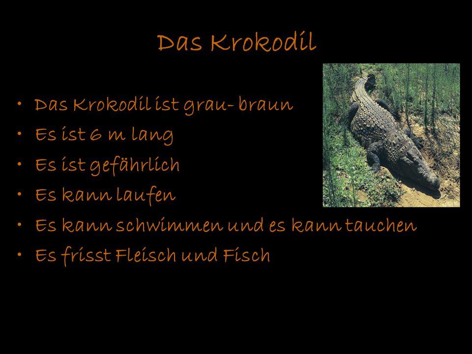 Das Krokodil Das Krokodil ist grau- braun Es ist 6 m lang Es ist gefährlich Es kann laufen Es kann schwimmen und es kann tauchen Es frisst Fleisch und