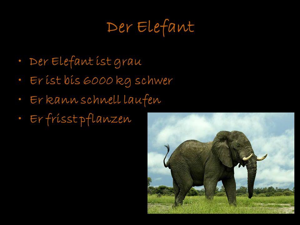 Der Elefant Der Elefant ist grau Er ist bis 6000 kg schwer Er kann schnell laufen Er frisst pflanzen
