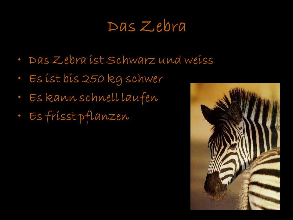 Das Zebra Das Zebra ist Schwarz und weiss Es ist bis 250 kg schwer Es kann schnell laufen Es frisst pflanzen