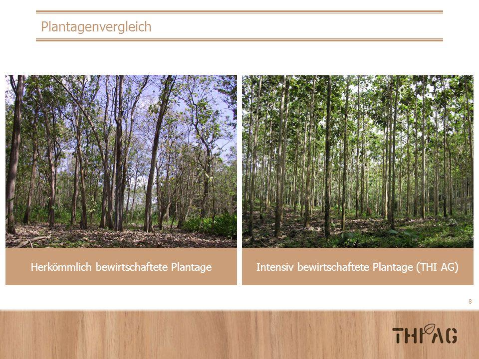 8 Plantagenvergleich Intensiv bewirtschaftete Plantage (THI AG) Herkömmlich bewirtschaftete Plantage