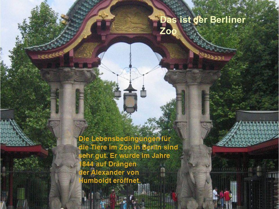 Das ist der Berliner Zoo Die Lebensbedingungen für die Tiere im Zoo in Berlin sind sehr gut. Er wurde im Jahre 1844 auf Drängen der Alexander von Humb