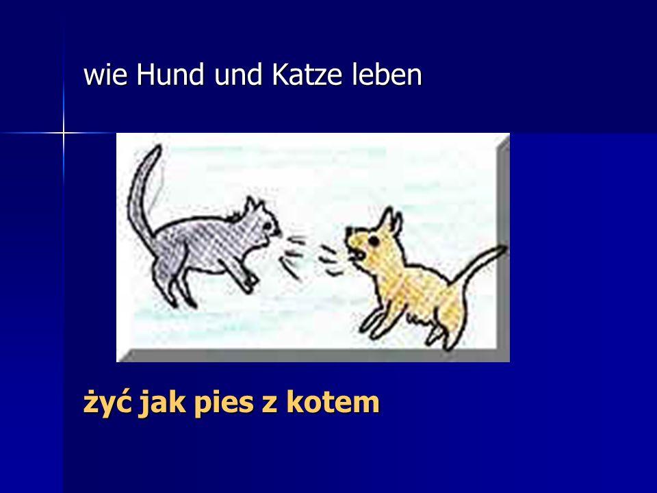 wie Hund und Katze leben żyć jak pies z kotem