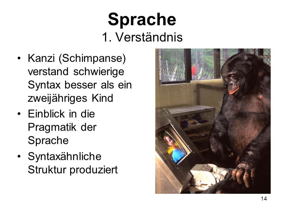 14 Sprache 1. Verständnis Kanzi (Schimpanse) verstand schwierige Syntax besser als ein zweijähriges Kind Einblick in die Pragmatik der Sprache Syntaxä