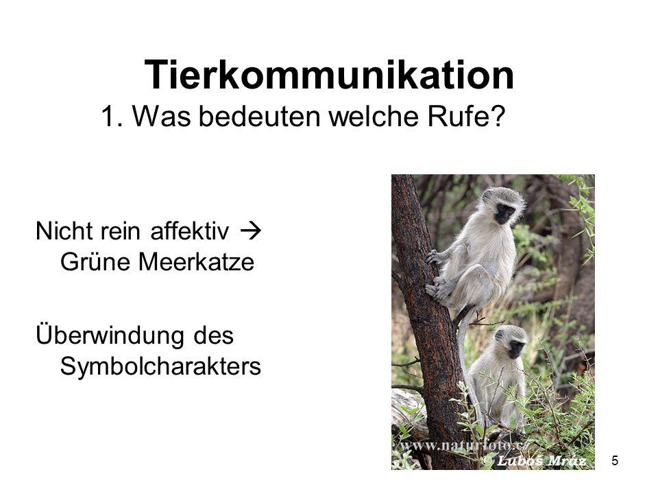 5 Tierkommunikation 1. Was bedeuten welche Rufe? Nicht rein affektiv Grüne Meerkatze Überwindung des Symbolcharakters