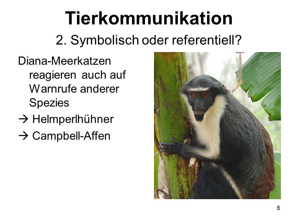 6 Tierkommunikation 2. Symbolisch oder referentiell? Diana-Meerkatzen reagieren auch auf Warnrufe anderer Spezies Helmperlhühner Campbell-Affen