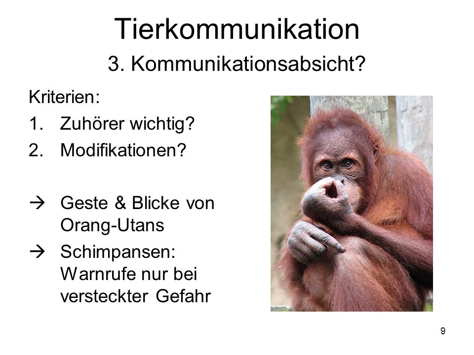 9 Tierkommunikation 3. Kommunikationsabsicht? Kriterien: 1.Zuhörer wichtig? 2.Modifikationen? Geste & Blicke von Orang-Utans Schimpansen: Warnrufe nur