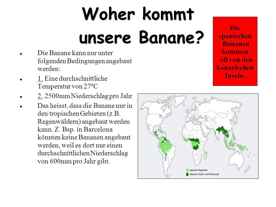 Woher kommt unsere Banane? Die Banane kann nur unter folgenden Bedingungen angebaut werden: 1. Eine durchschnittliche Temperatur von 27ºC 2. 2500mm Ni