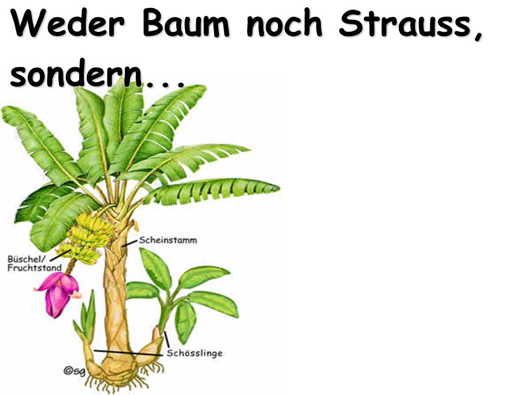 Weder Baum noch Strauss, sondern...