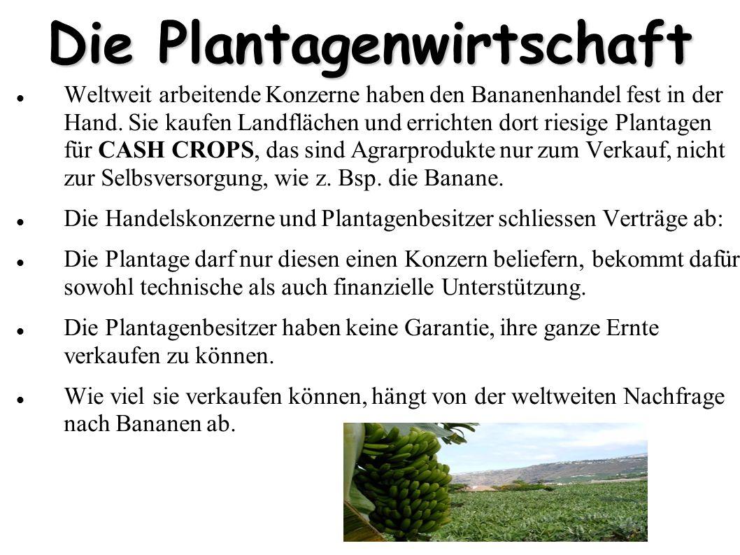 Die Plantagenwirtschaft Weltweit arbeitende Konzerne haben den Bananenhandel fest in der Hand. Sie kaufen Landflächen und errichten dort riesige Plant